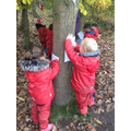 Learning how to make Tree Rubbings.