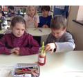 March - In Science we are learning how water travels around a plant.
