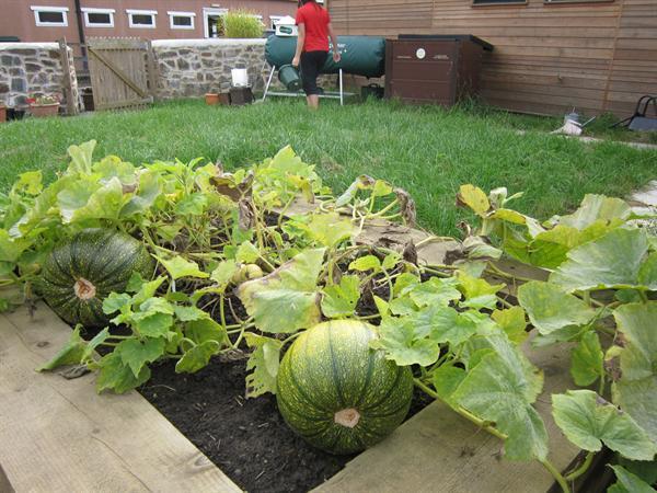 pumpkins Sept 2012