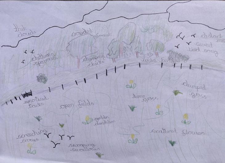 Oliver K.W daffodil inspiration sketch