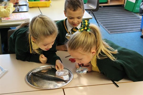 Preparing, cooking and tasting Stone Age food