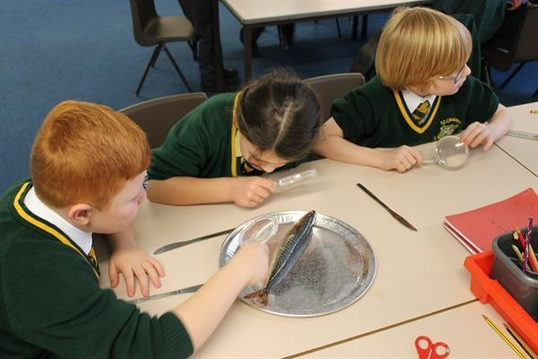 Preparing, cooking and tasting Stone Age food