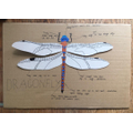 Ivy's dragon fly diagram