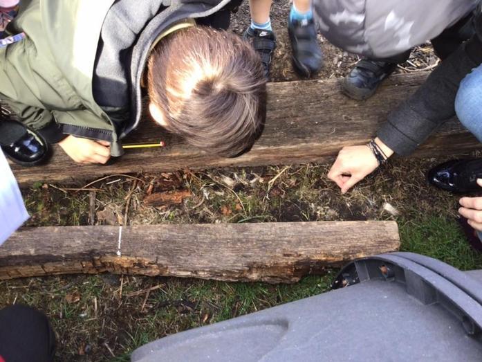 We went on a bug hunt!