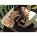 Year 2 planted out their vegetable seeds in the Garden of Eden