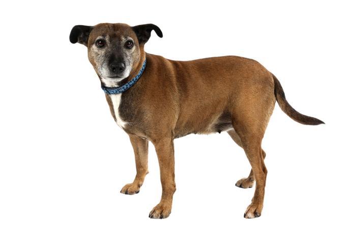Martha - School Dog