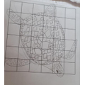 Leo sent in his fabulous turtle sketch. Great!
