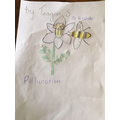 Beautiful picture to represent pollination Teagan!