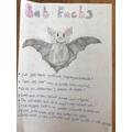 Lyra's bat facts