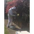 Bee keeper looking for the queen bee!