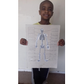 Michael has been learning about the skeleton