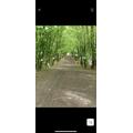 JACK R ON A WALK THROUGH FOREST