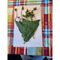 Makayla's Science Work-Plants
