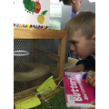 Observing our caterpillars