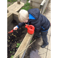 Planting our own vegetables