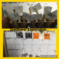 Sunflower Exploration - Observing how the seed changes each day.