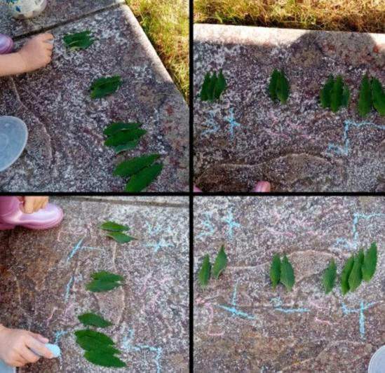 Making use of leaves for maths