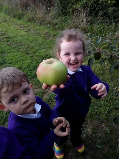 We picked apples from the trees.
