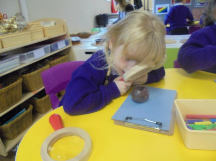 We used magnifying glasses to make observations