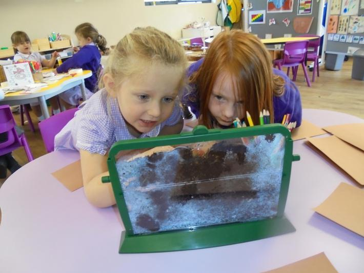 We enjoyed making observations of the worms.