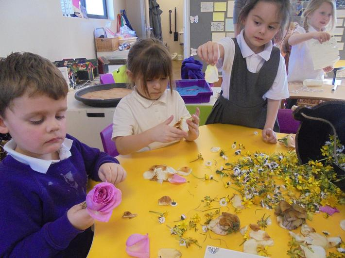 We picked petals from a variety of flowers.