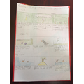 Olly's comic strip for seed dispersal