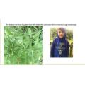 Understanding seed dispersal