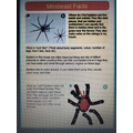 Spider Fact File