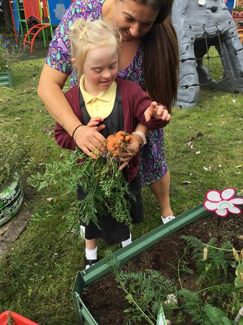 Harvesting the carrots we planted in Spring.