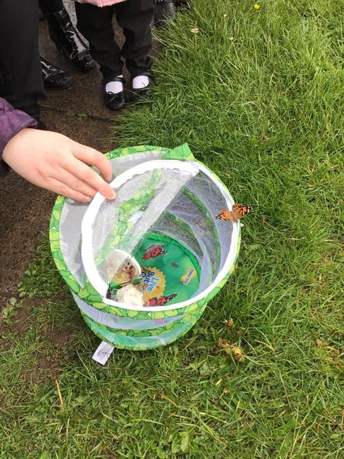 We got the opportunity to grow our very own butterflies. We released them into the wild.