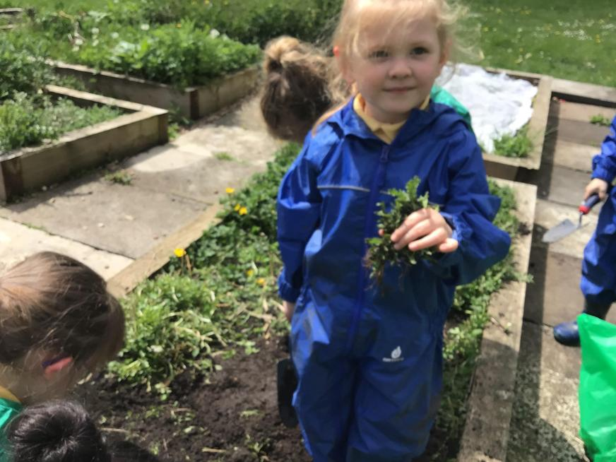 We have been busy weeding and planting in the garden.