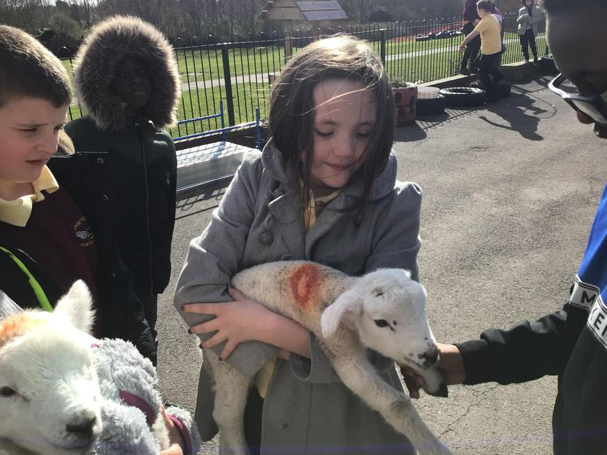 meeting some baby lambs