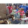 Year 2 - Donkey fun