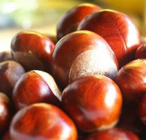 Conkers and other Seasonal Items