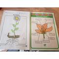 JG flower work