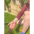 Jacob released his butterflies.