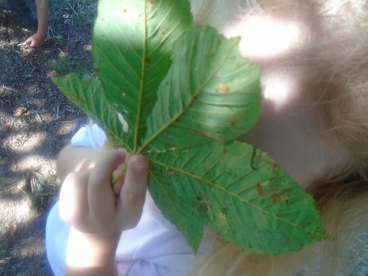 Hiding behind my giant leaf