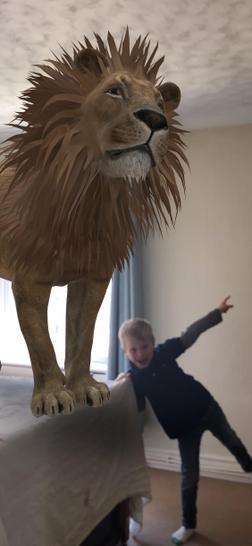 A pet lion!?