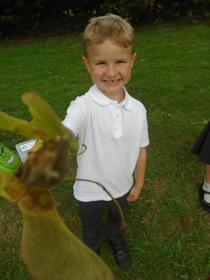 My giant leaf