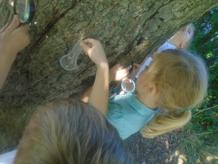 Tree detectives