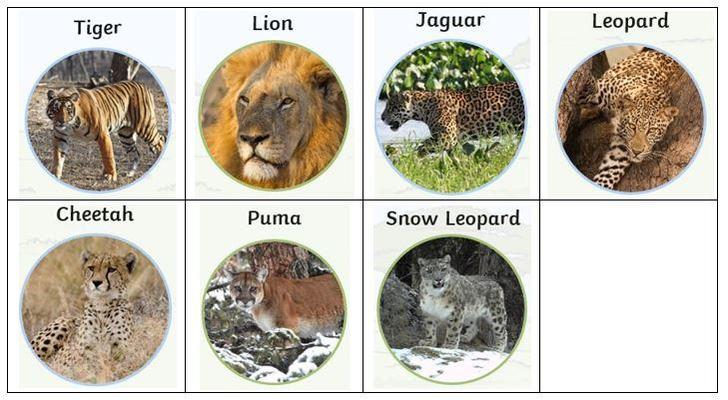 Examples of bigger cats