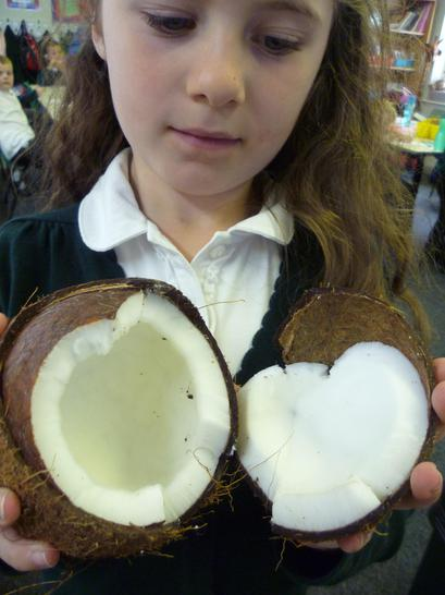 Coconut from South America