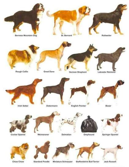 Dog breeds, organised by size