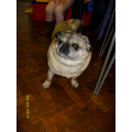 Pugsley the Pug