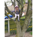Tree climbing! 🌟