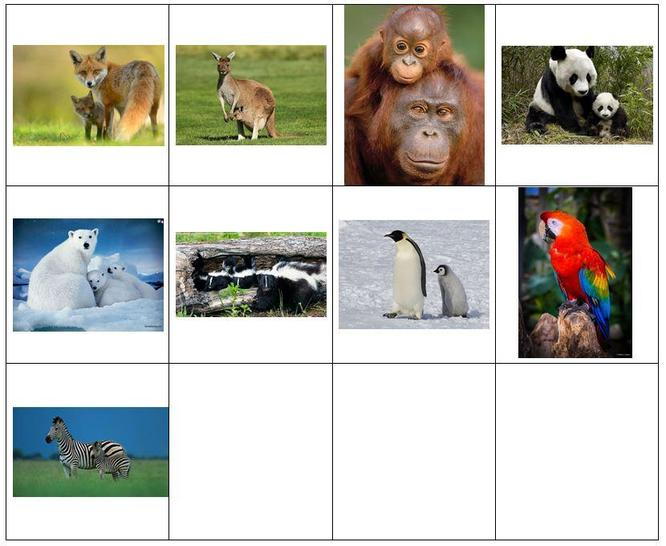 animals to sort