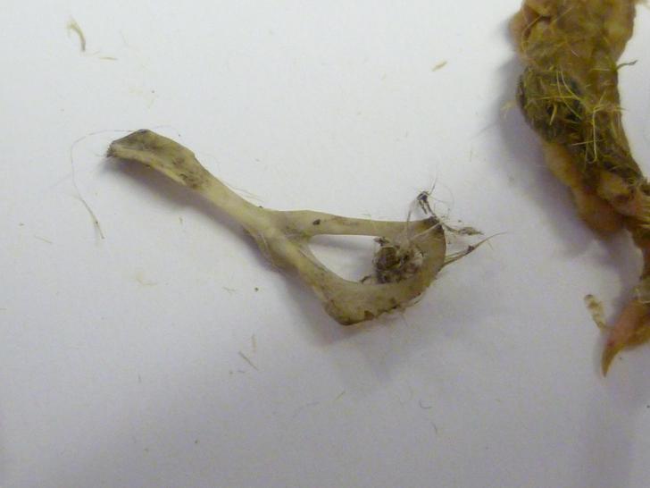 Pelvic bone