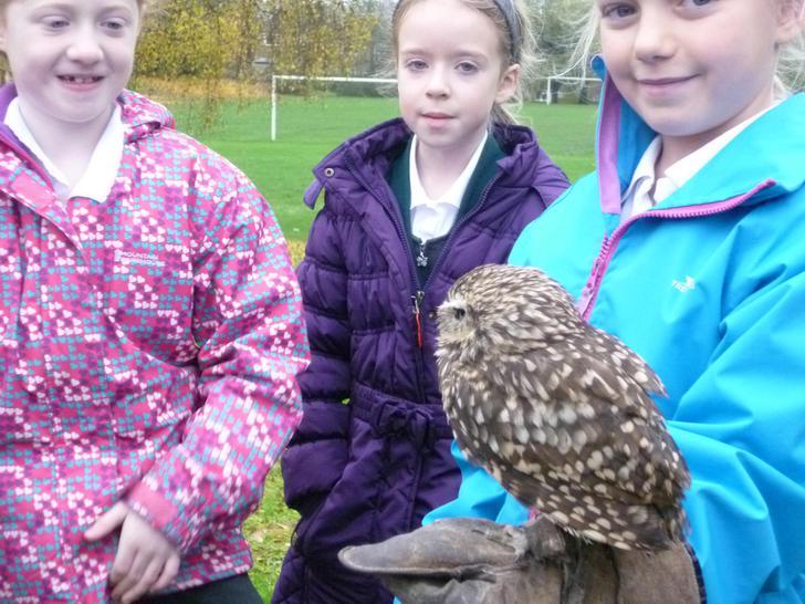Dozo the Burrowing Owl