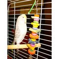 Sparky the budgie