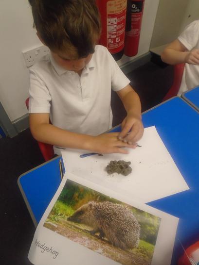 Creating a clay hedgehog